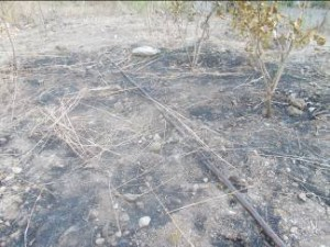 damage due to fire at various plots-2
